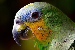 /hugo-theme-w3css-basic.github.io/resources/images/teaserpics/pixabay.com/parrot-2756488_640_hu1ebc71a9ced423ce6830451a5ef35cd0_108501_300x0_resize_q75_box.jpg